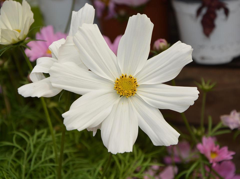 Flower white summer flowers free photo on pixabay flower white summer flowers nature garden petals mightylinksfo