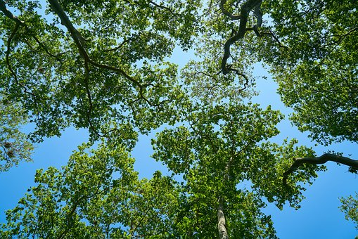 Tree, Blue, Nature, Sky, Forest