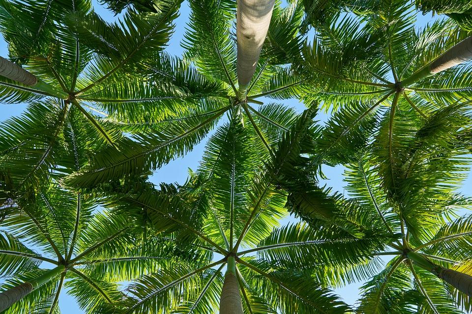 Дерево, Пейзаж, Справочная Информация, Природа
