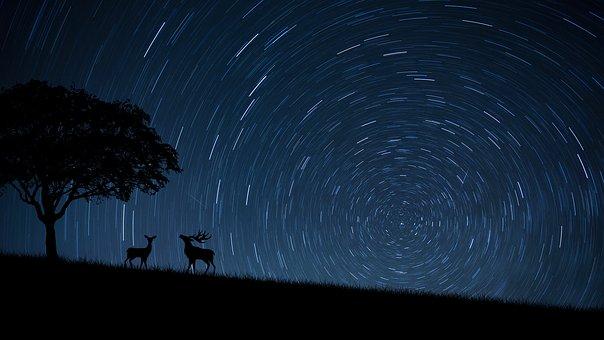 親愛なります, Dears, 星, ツリー, 動物, スピン, 泊, 青, 土地