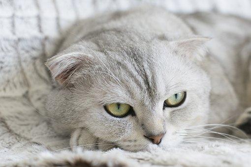 Katze, Tier, Haustier, Kätzchen