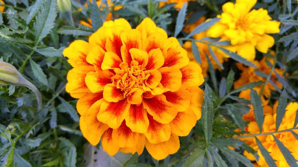 Famosos Flor Amarelo Laranja · Foto gratuita no Pixabay LB34