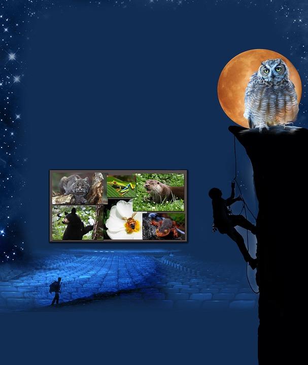 Grafik-Design Filmplakat · Kostenloses Foto auf Pixabay