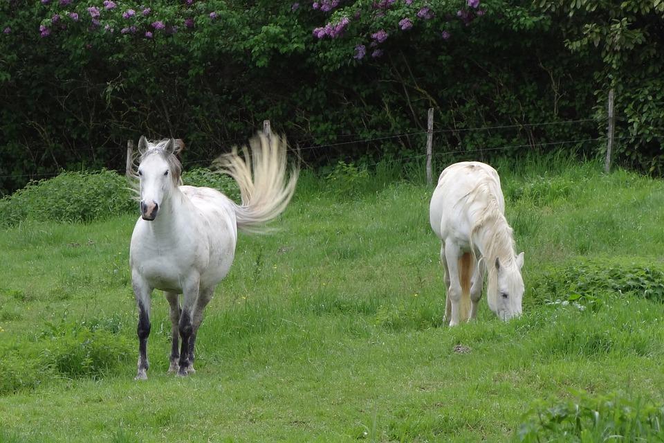 Caballos, Campo, Naturaleza, Animales, Pasto, Hierba