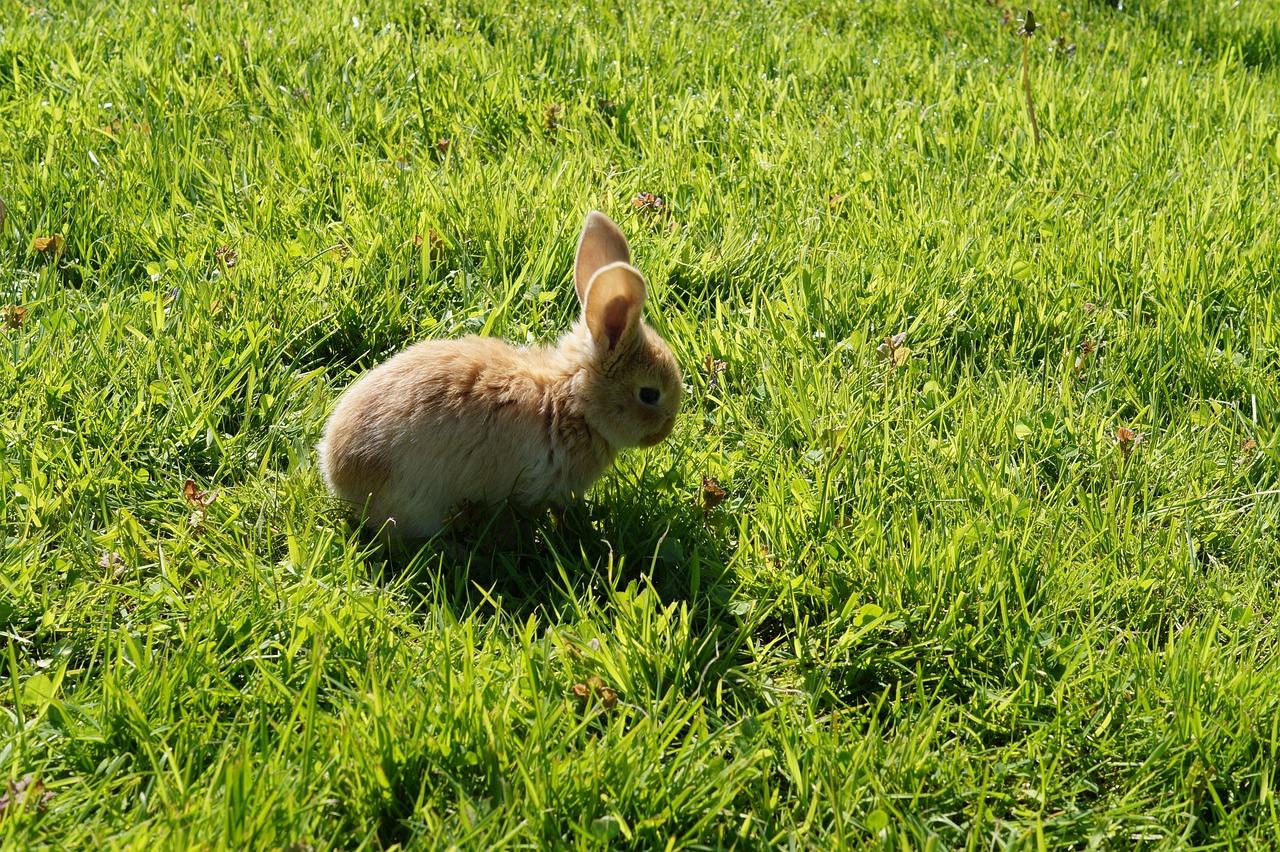 Картинки бешинава кролика