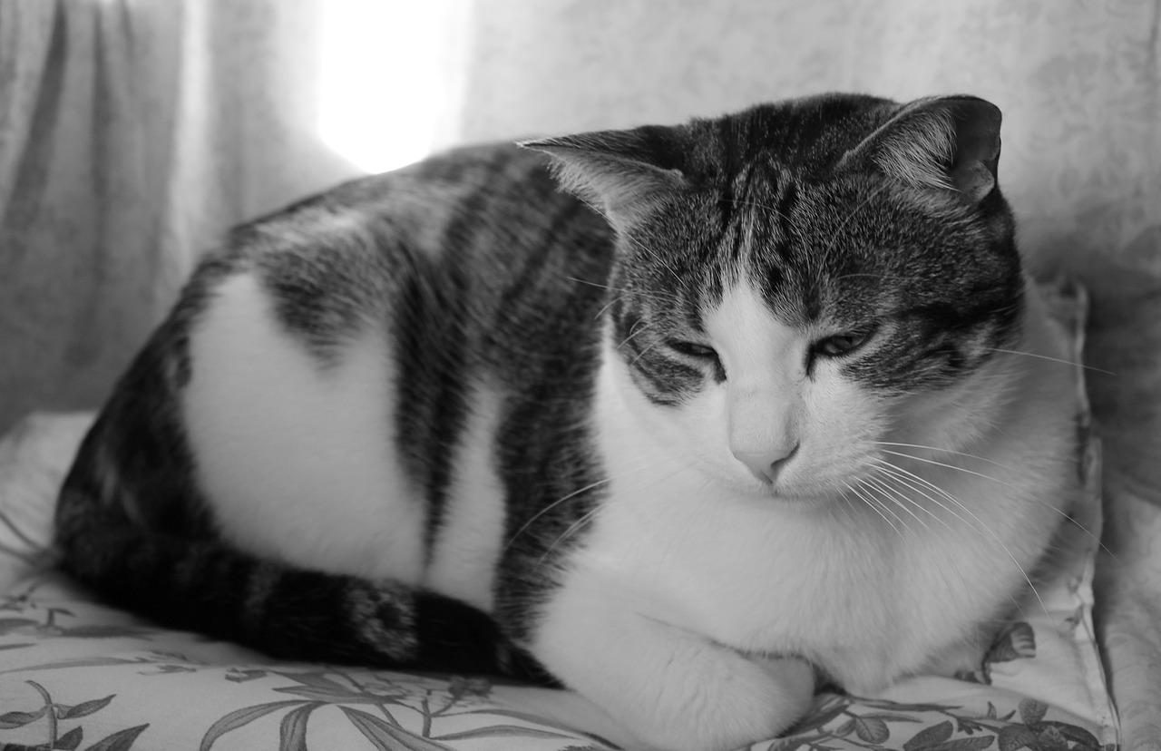 gato não quer comer e está triste