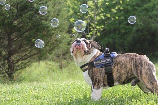 Dog, Bubbles, Bulldog, Green Bubbles