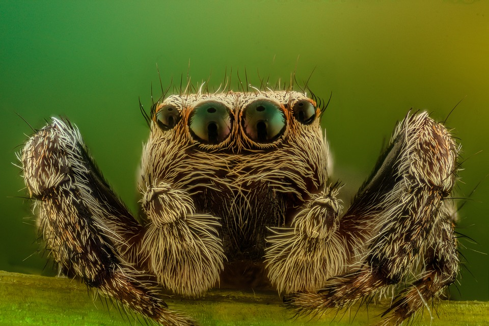 Free Photo Spider Macro Jumper Nature Free Image On