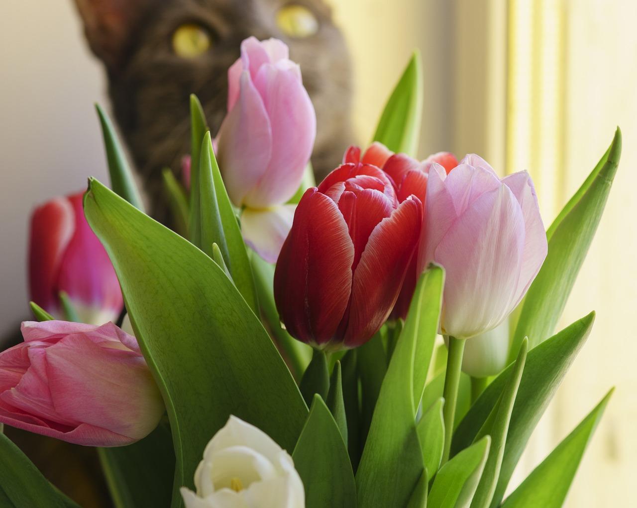 смотреть картинки с тюльпанами того