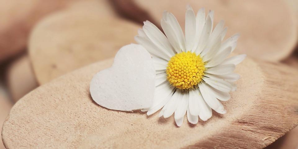 Gänseblümchen, Herz, Herzchen, Blüte