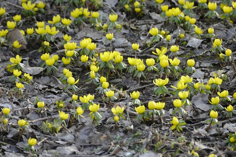 Fiori 1 Maggio.Primavera 1 Maggio Primo Foto Gratis Su Pixabay