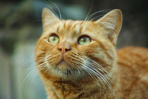 Cat, Animal, Yellow, Cute