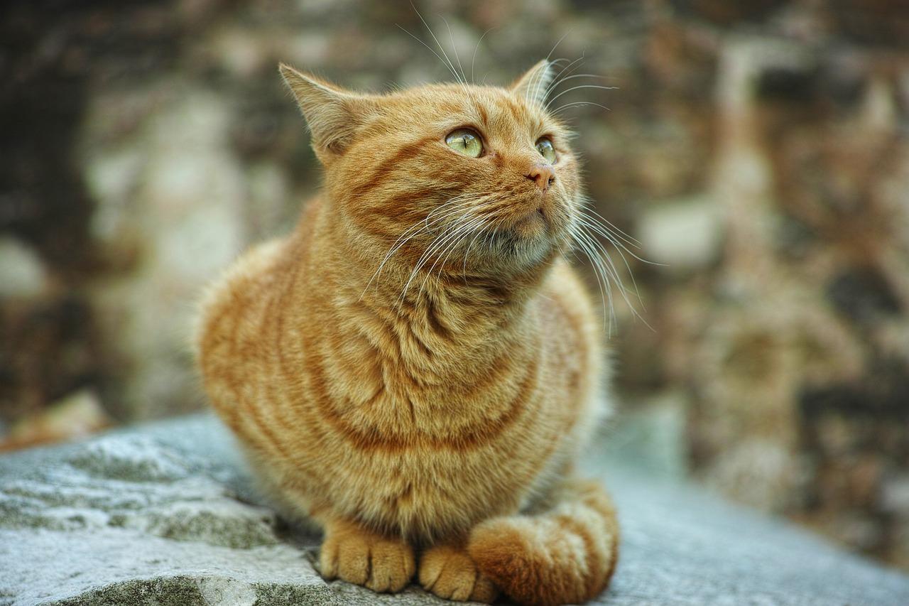 картинки желтого котика