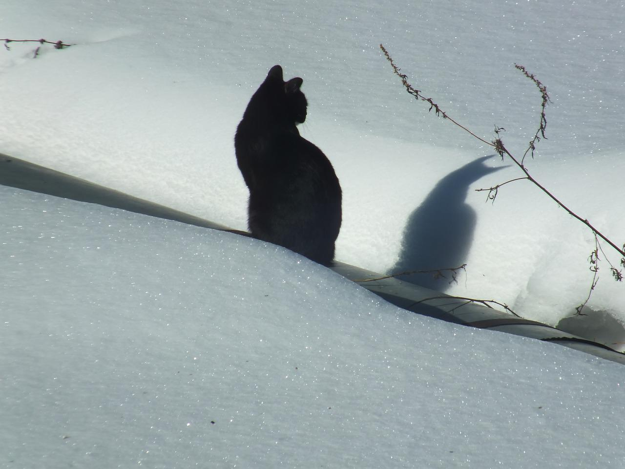 натуральной картинка черная кошка в снегу профессионализм