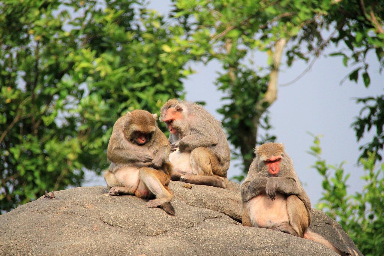 рекомендуем картинки трех обезьянок замерзший юноша