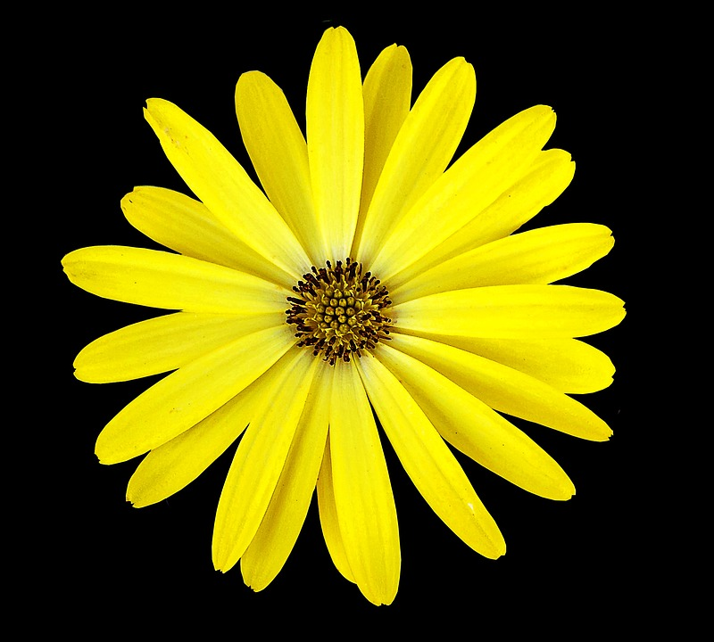 Yellow flower black background free photo on pixabay yellow flower black background flower mightylinksfo