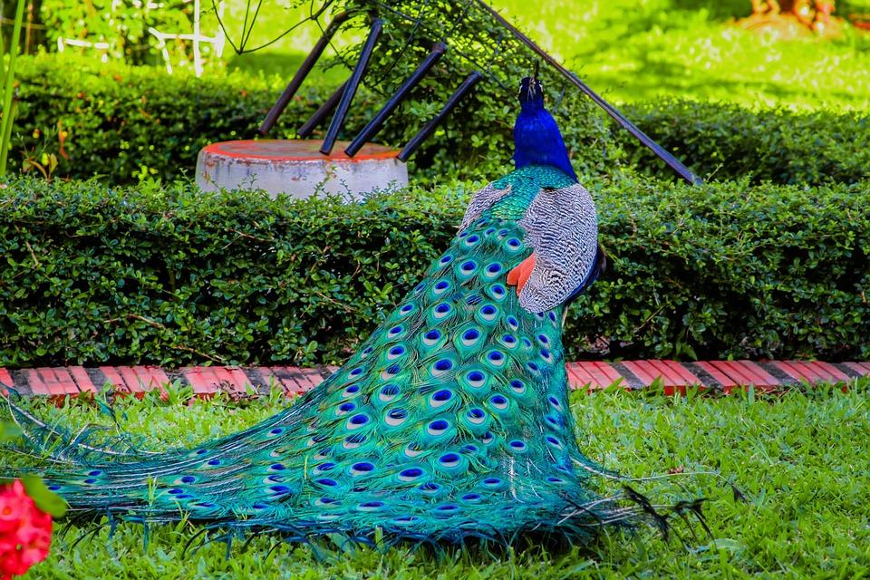 turkey colors royal free photo on pixabay