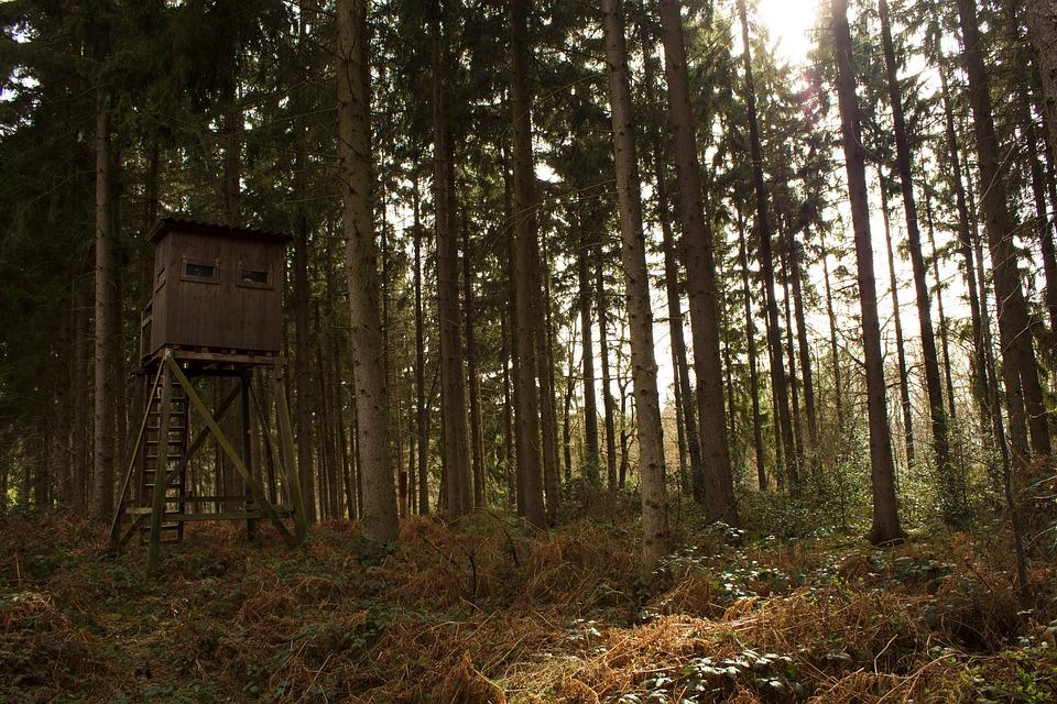 Čeke i osmatračnice Forest-2316482_960_720