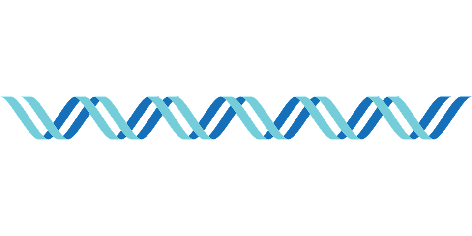 dna icon double stranded free vector graphic on pixabay