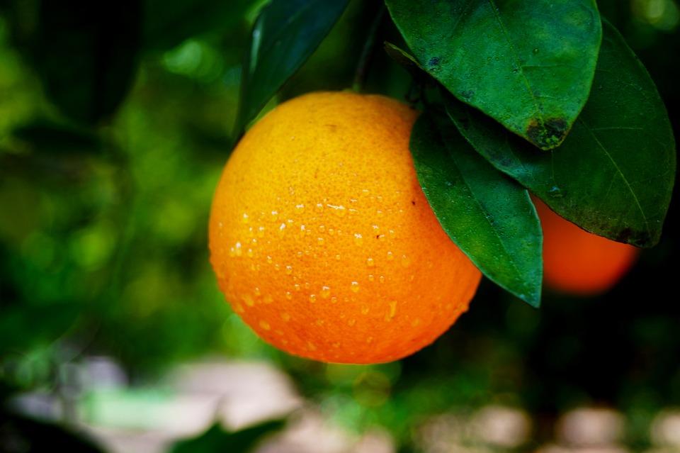 Portakal, Meyve, Yiyecek, Taze, Sağlık, Gıda, Organik