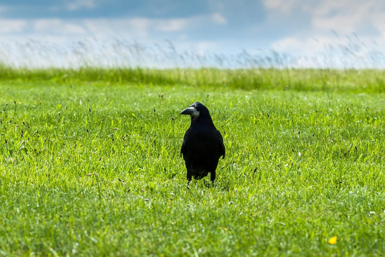 Картинки птицы поля