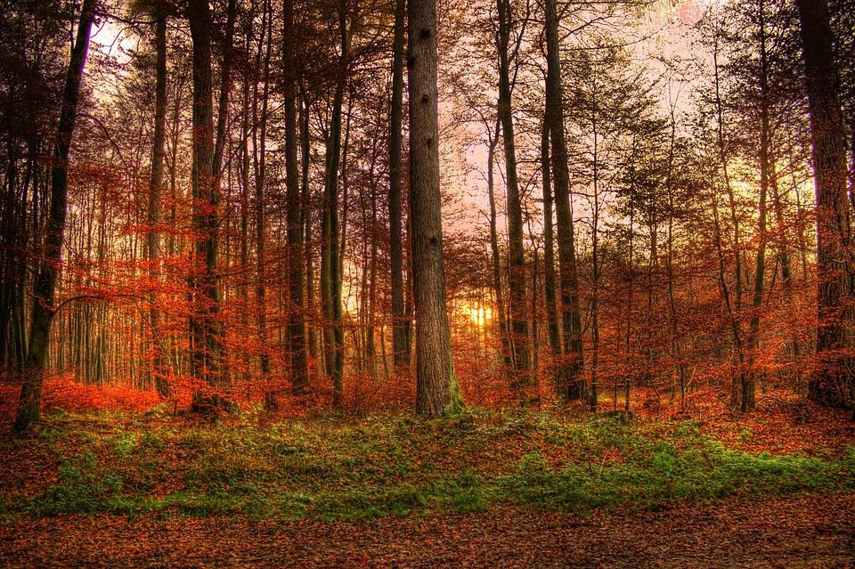Sunset Forest Sun 183 Free Photo On Pixabay
