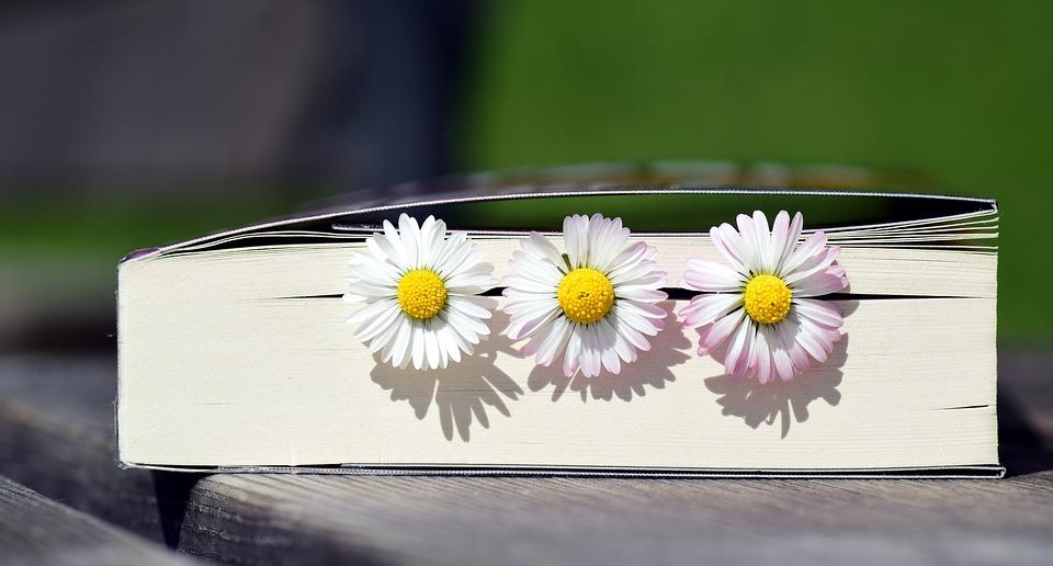 Buch, Lesen, Literatur, Buchseiten, Papier, Frühling