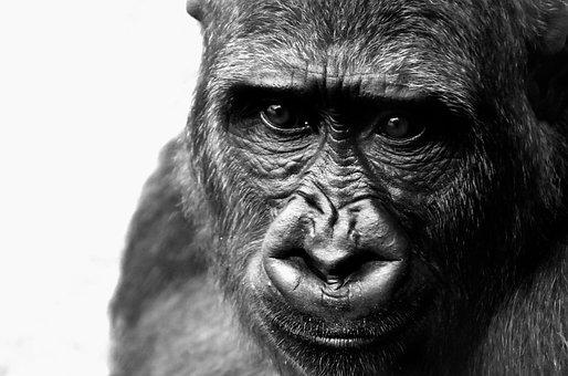 Scimmia Immagini Scarica Immagini Gratis Pixabay