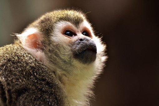 Download 9000 Wallpaper Lucu Monyet  Paling Baru