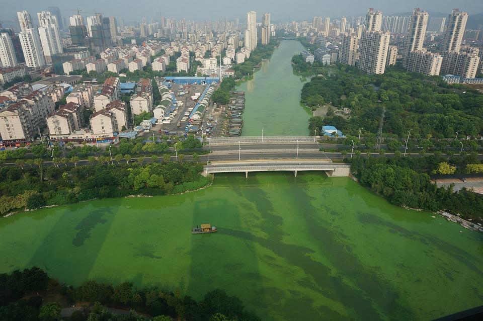 Cyanobacteria, Salvage, Bridge