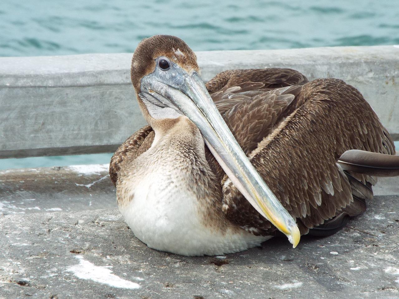 судно долетело водоплавающие птицы клювы фото и названия нанесения краски, самоклеящийся