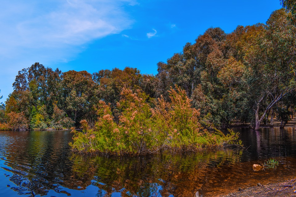 Lake, Forest, Park, Trees, Nature, Landscape, Scenery