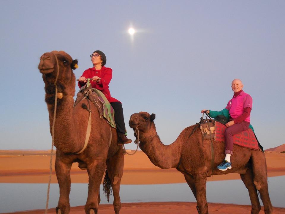 Foto gratis rabat marruecos camellos marroqu imagen - Fotos marrakech marruecos ...