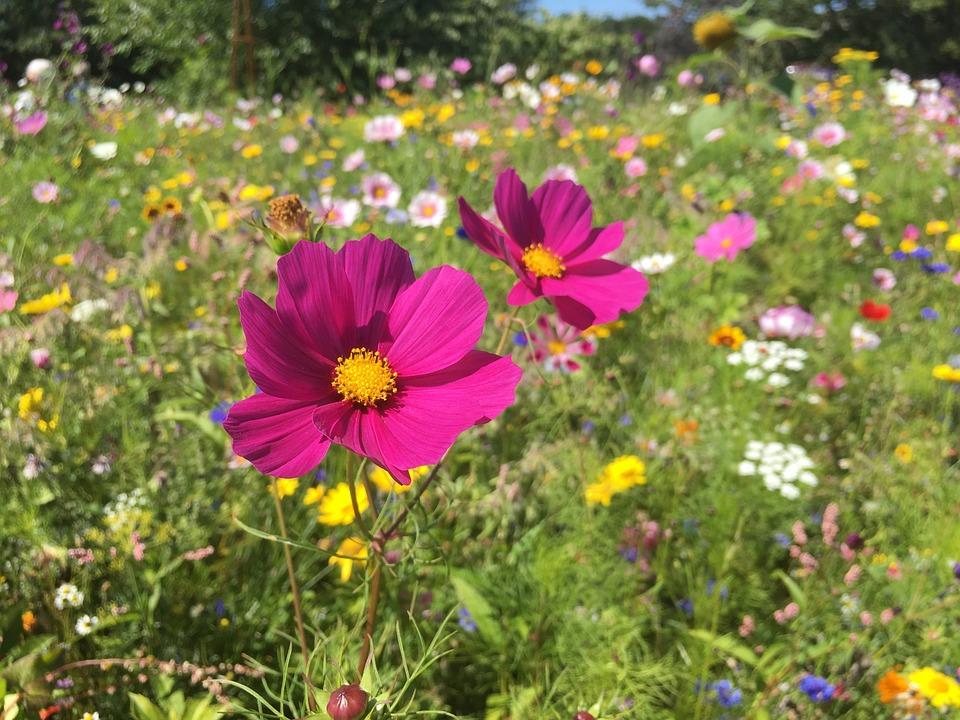Flowers English Cottage Garden