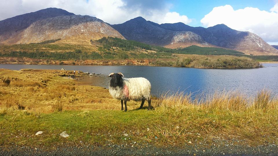 """Résultat de recherche d'images pour """"Connemara"""""""