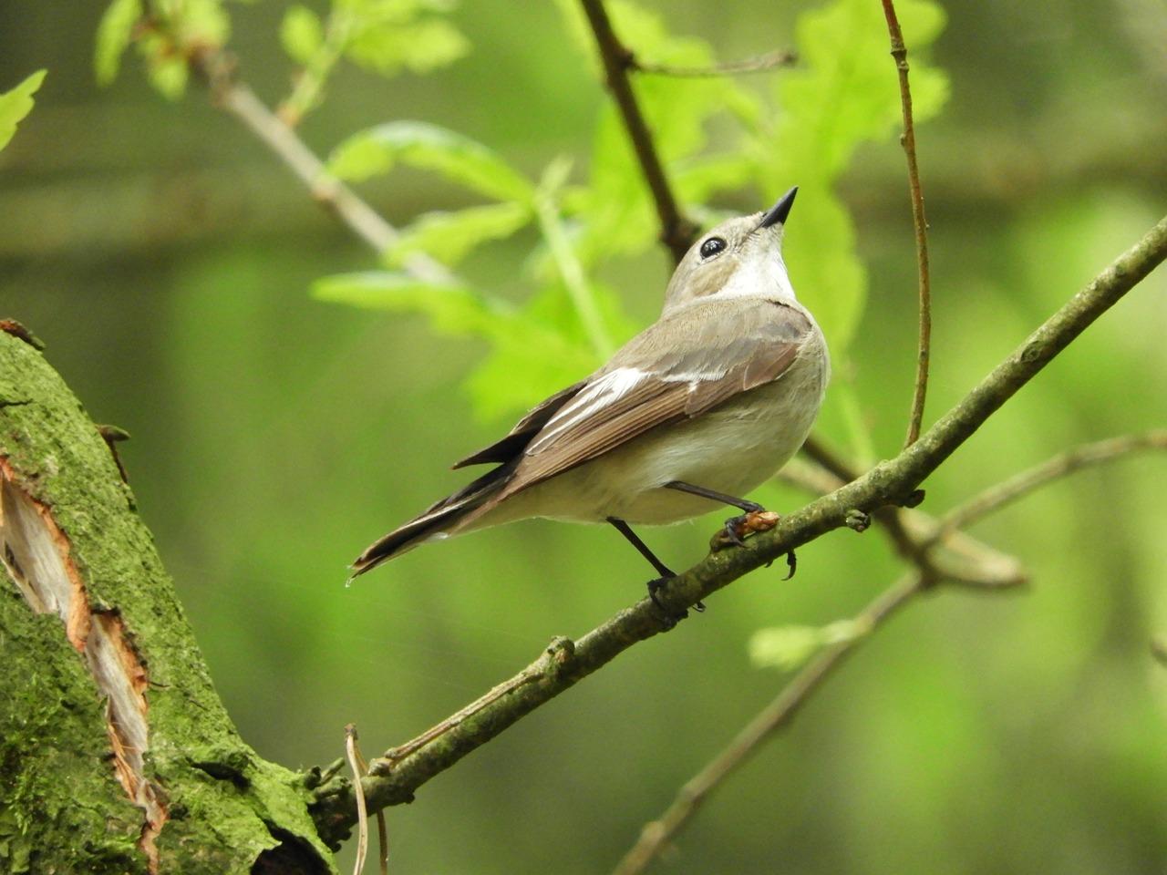 аквариум картинки птиц нашего леса крепление
