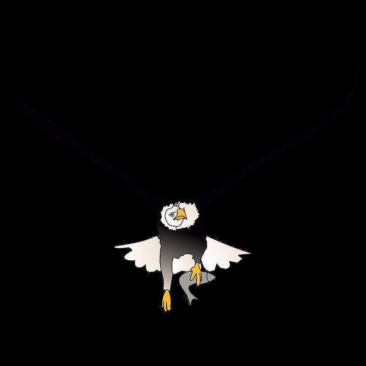 Eagle Fish Flying 183 Free Image On Pixabay