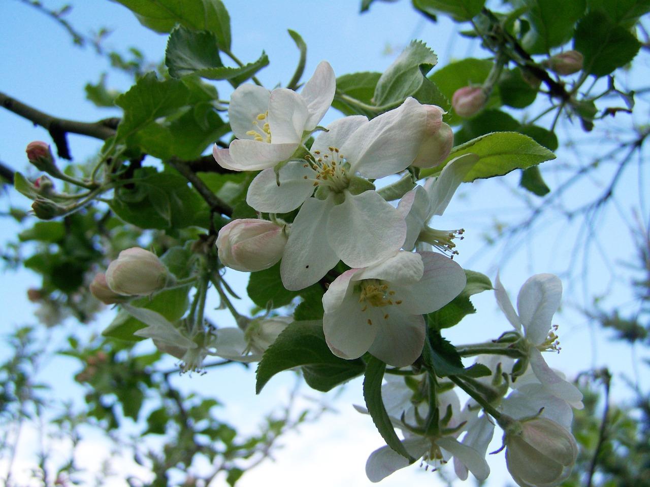 Что посадить на 6 сотках: деревья, растения, кустарники и цветы 6