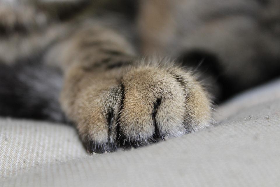 Cat Paw Print - Free photo on Pixabay