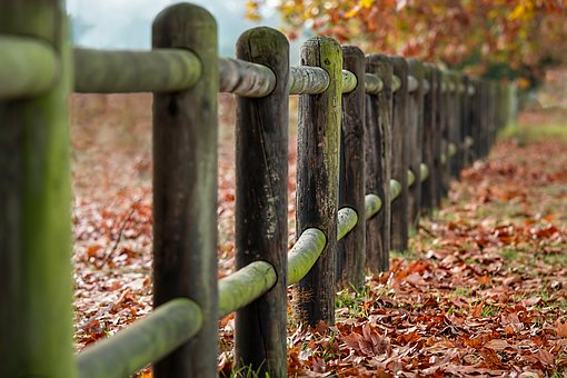 Fence Posts, Autumn, Leaves, Countryside