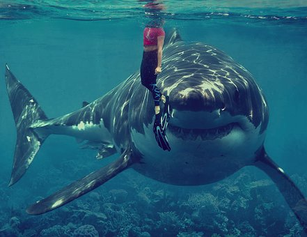 Man standing straight in front of a shark