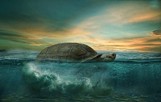 カメ, 海, 動物, 熱帯, 水中, 自然, カラフルです, 楽園, 水