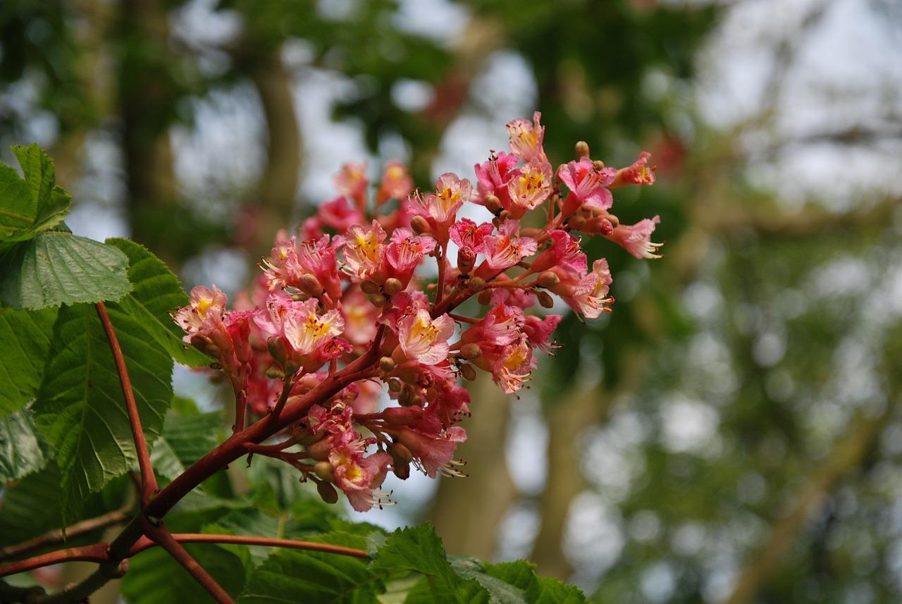 Для мамы, цветы каштана с цветами сирени