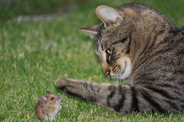 how to stop cats killing birds and mice