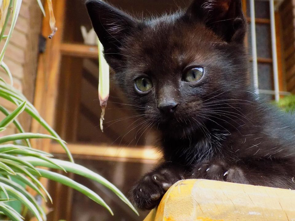 IKEA - LURVIG, Cestovná taška pre domáce zvieratká, Taška na prenášanie mačky sa otvára z oboch strán.Taška má z troch strán zákryt, takže vaša mačka sa v.
