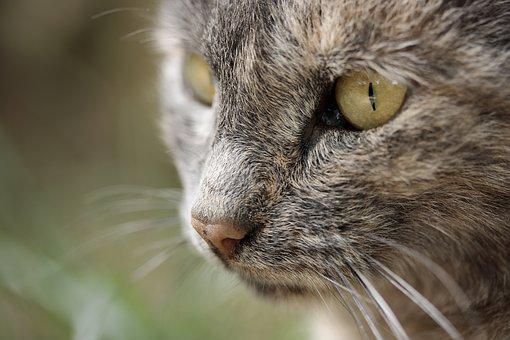 Cat Eye, Overview, Animal Portrait