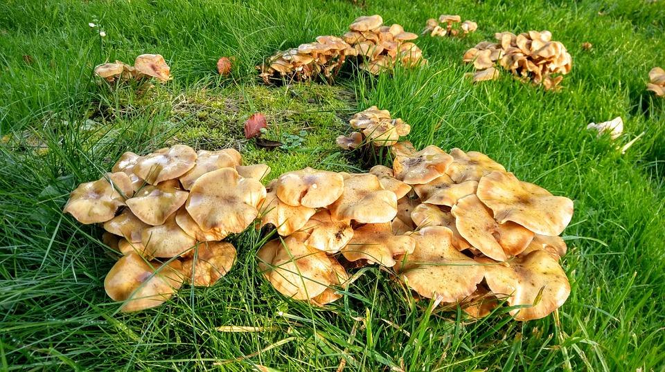Häufig Pilz Pilze - Kostenloses Foto auf Pixabay YG19