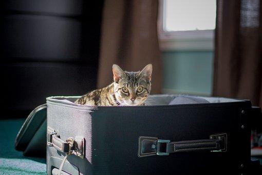 Travel, Cat, Kitten, Suitcase, Animal