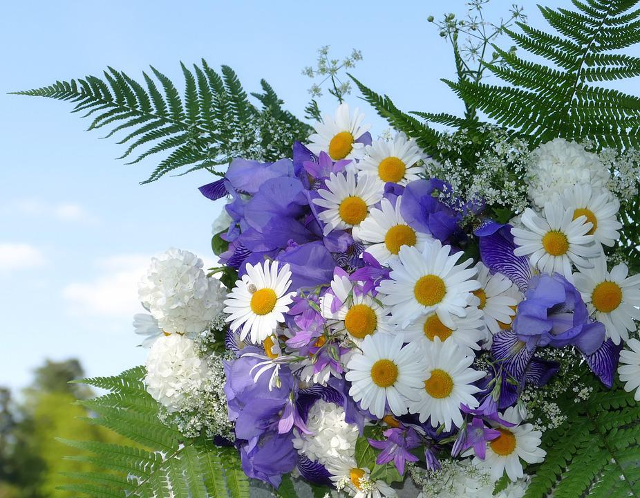Blumen Sommer Weiss · Kostenloses Foto auf Pixabay