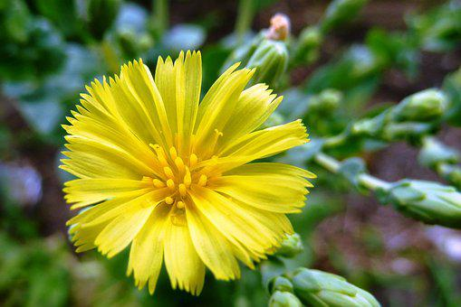 バター, レタス, 新鮮な, 花, 庭, 自然, 健康, 植物, 有機, 葉